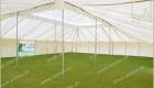 Mughal Tent